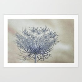 Vintage Wildflower Botanical Queen Anne's Lace in Blue Art Print