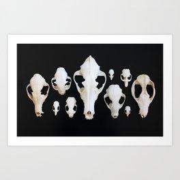 Skull Collage Art Print