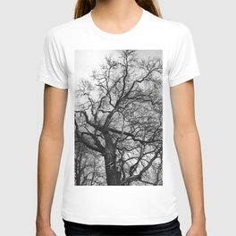 Old oak tree. Moscow district. T-shirt
