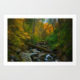 Fall Foilage - Great Smoky Mountains Art Print