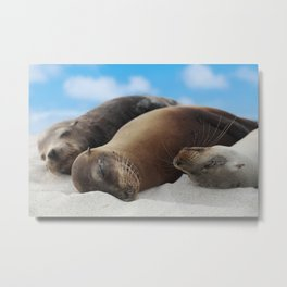 Galapagos Sea lions family sleeping on beach Metal Print