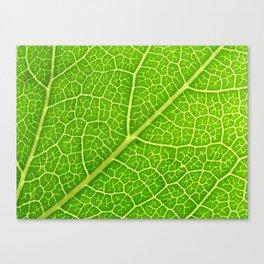 Green Leaf Veins 04 Canvas Print