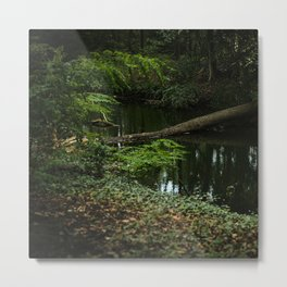 Mystery Dark Forest | The Netherlands | Color Photography | Nature photography | Photo Print | Art Print Metal Print