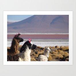 Lovly Lamas Art Print