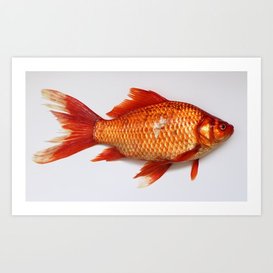 Red Gold Fish Art Print