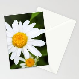 Dew Drops on Daisy's Stationery Cards