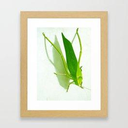 Kadydid Framed Art Print