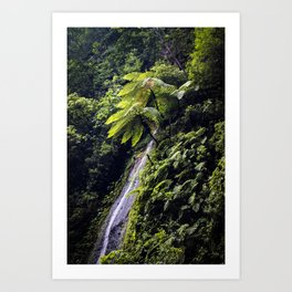 Waterfall Coming Down the Mountainside with Ferns and Lush Trees in Chocoyero-El Brujo, Nicaragua Art Print