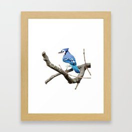 Blue Jay in Branches Framed Art Print