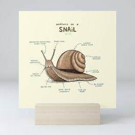 Anatomy of a Snail Mini Art Print