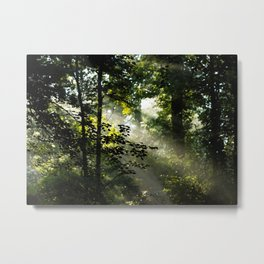 Forest Morning Metal Print