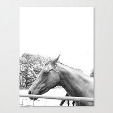 Horse Head IV Canvas Print