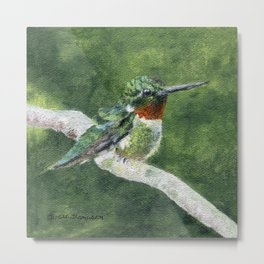 Romeo the Hummingbird by Teresa Thompson Metal Print