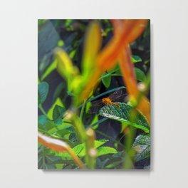 Maine Dragonfly (1) Metal Print