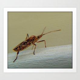 Western Conifer Seed Bug Art Print