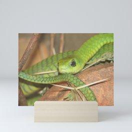 Green viper Mini Art Print