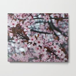 cherry plum confection Metal Print