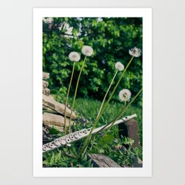 Wishing Flower Melody Art Print