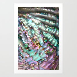 Abalone Shell Art Print