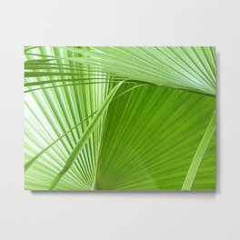 Palm Leaves // Tropical Wall Art, Beach Cottage Decor, Coastal Art Metal Print