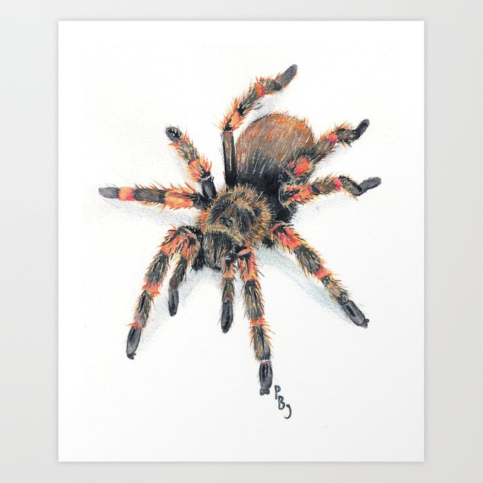 Fido Hawaiian Cane Spider Art Print By Petejanes Society6
