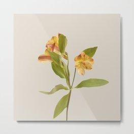 Floral Variations 3 Metal Print