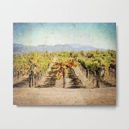 The Vineyard Metal Print