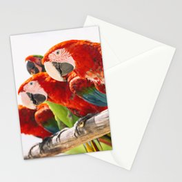 Red macaws Stationery Cards