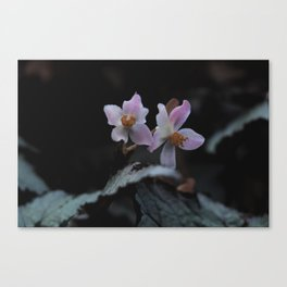 Wildflower Series - Christchurch Botanical Canvas Print