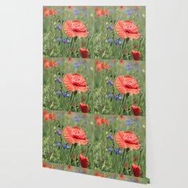 poppy flower no16 Wallpaper
