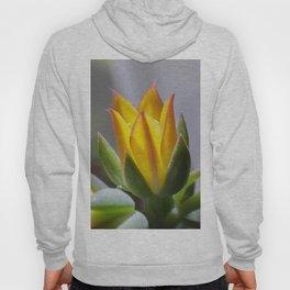 Firey succulent flower Hoody