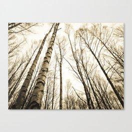 Tree Trunks I Canvas Print