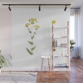 Botanical illustration Wall Mural