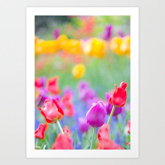 Soft Tulips Art Print