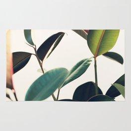 Ficus Elastica #8 Rug