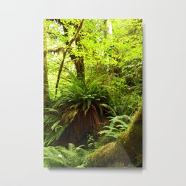 Rainforest Ferns Metal Print
