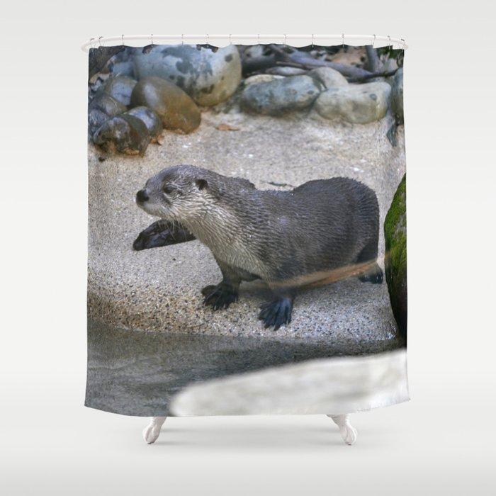 Otter Shower Curtain By Roninartist