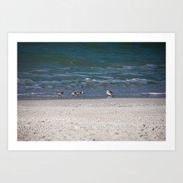 Gulf Gathering Art Print