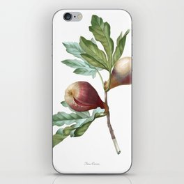 HIGHEST QUALITY botanical poster of Fig iPhone Skin