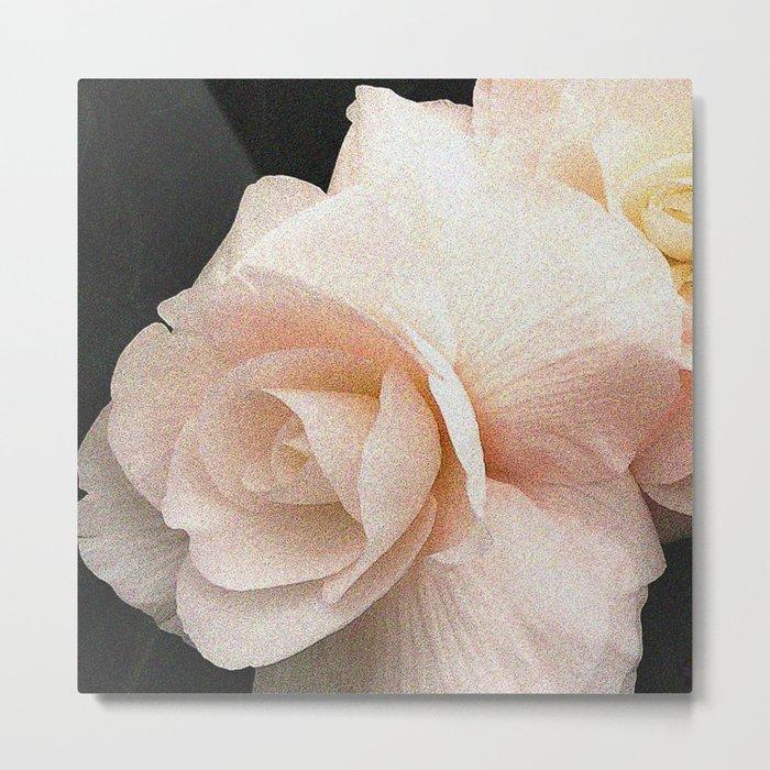 Pale Pink Begonia Metal Print
