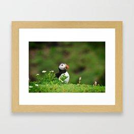 Puffin from Ireland  (RR 238) Framed Art Print