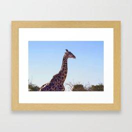 Giraffe Doobie Framed Art Print