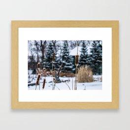 Winter Bulrushes Framed Art Print