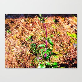 Acidic Flower Canvas Print