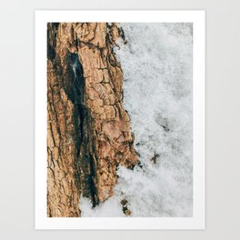 Texture of the Tree Art Print