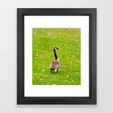 Goose in a field of flowers Framed Art Print