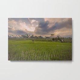 Bali rice field Metal Print