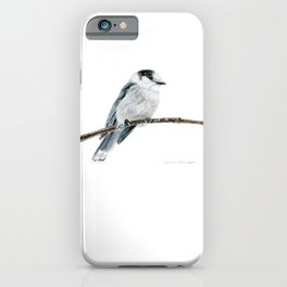 Gray Jay by Teresa Thompson iPhone Case