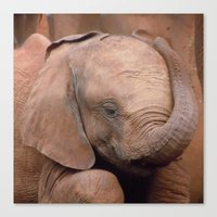 baby elephant Canvas Prints featuring Baby Elephant by Adelies