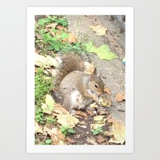 The Hungry Squirrel Art Print